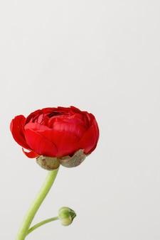 Still life arrangement of interior flower in vase