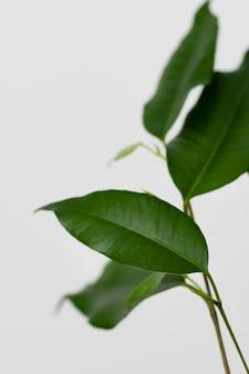 Натюрморт из зеленого растения