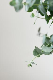 그린 관엽 식물의 정물 구색