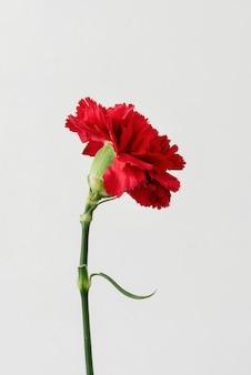 屋内の花の静物のクローズアップ
