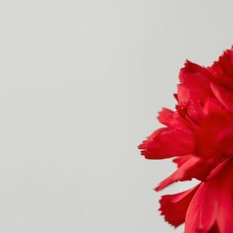 실내 꽃의 정 클로즈업