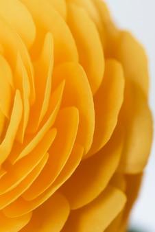 Натюрморт крупным планом цветок в помещении