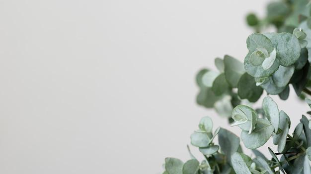 Composizione di natura morta della pianta verde al chiuso