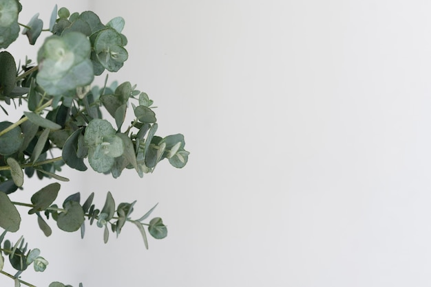Still life composition of green plant indoors