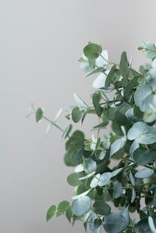 Натюрморт композиция из зеленого растения в помещении