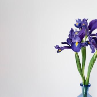 屋内植物の静物構成