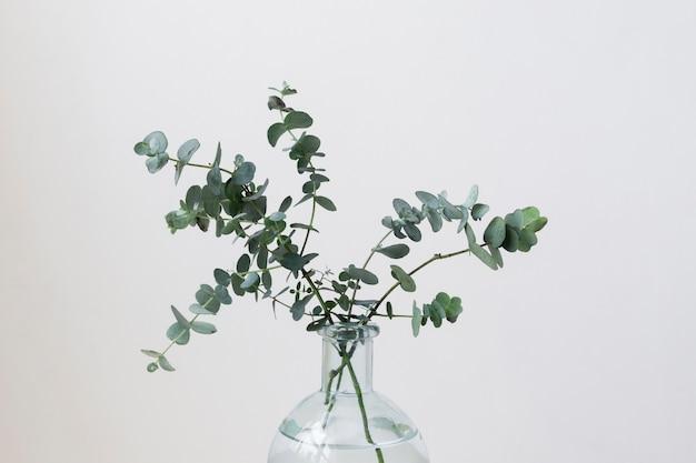 Composizione di natura morta della pianta al chiuso