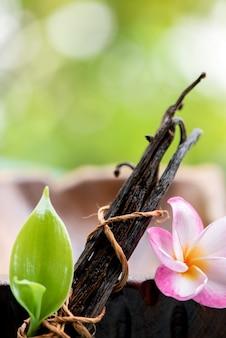 静物乾燥バニラポッド、緑の葉