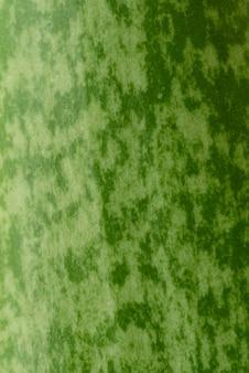 Natura morta pianta verde al chiuso