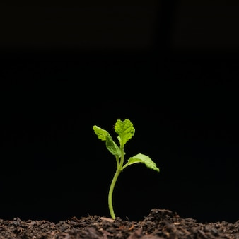 Still life of growing seedling