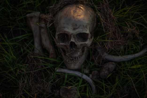 Still life, human skulls and bones dinged on dry grass in the field which has dim light.