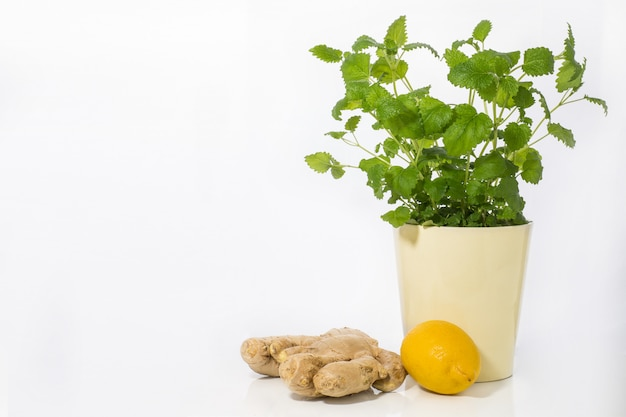 Still life of mint in a pot, lemon and ginger