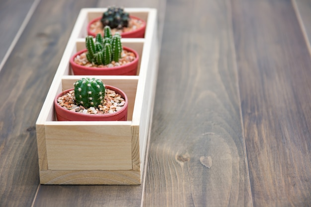 Still life of natural three cactus plants on vintage brown wooden background texture