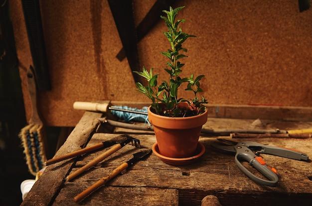 정원용 도구와 정원 가위의 정물은 시골 나무 전망대에 있는 나무 탁자에 민트 잎을 심은 항아리 옆에 누워 있습니다.