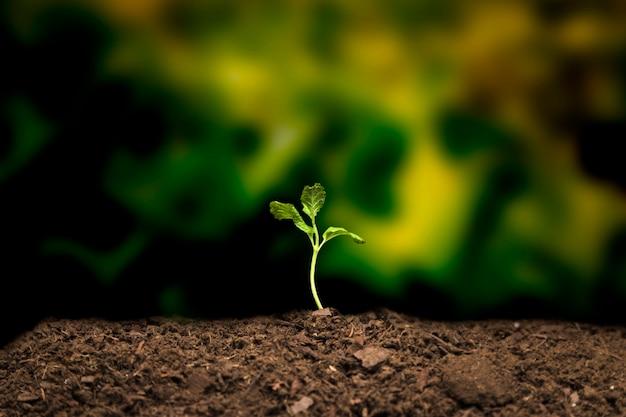 Натюрморт выращивания рассады