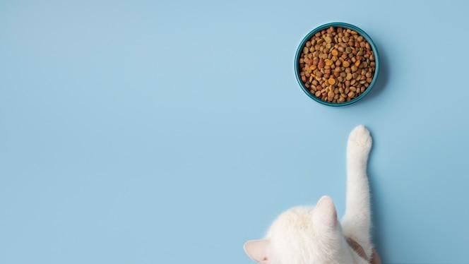 Ассортимент кормов для домашних животных натюрморт