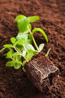 Still life of plant on soil
