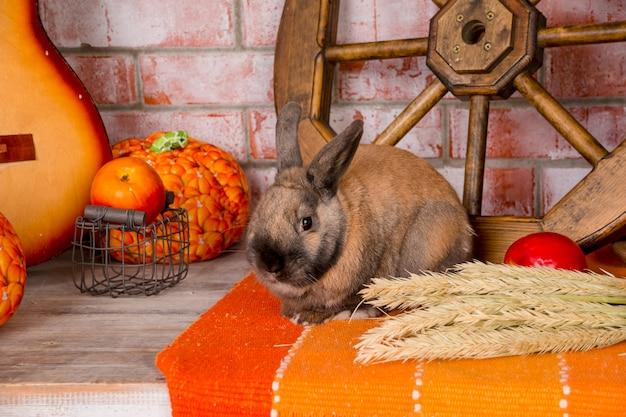 Натюрморт ко дню благодарения с осенними овощами, фруктами, тыквой, пшеницей и смешными Premium Фотографии