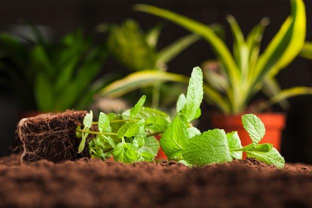 Still life of various plant on soil