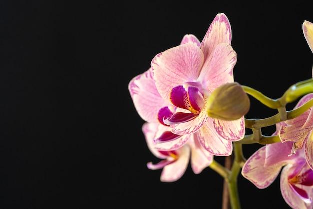 黒の背景に美しい蘭の花のある静物