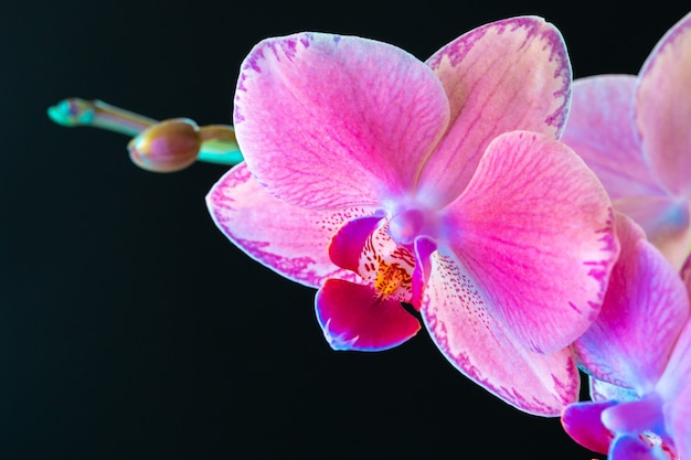 Still life with beautiful orchid flowers