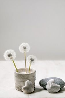 Натюрморт с распускающимися пушистыми цветами одуванчиков в керамическом горшке ручной работы с гладкими камнями на белой мраморной поверхности