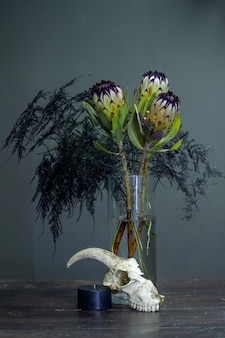 Still life with a bouquet of protea, black candle and a goat skull on a dark background, selective focus