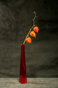 Still life with a branch of physalis in a red bottle