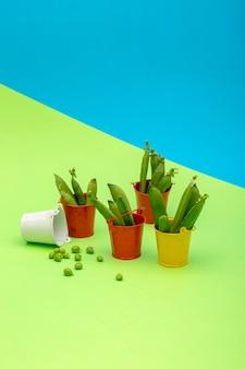 색 배경에 양동이와 완두콩이 있는 정물