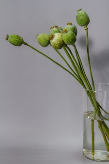 ガラスの花瓶に緑の巨大なケシの実の鞘のある静物