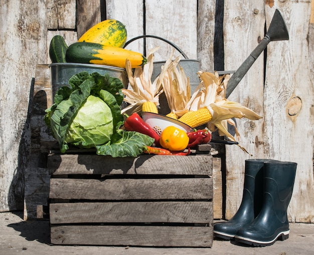 Still life with harvest of fresh vegetables with watering can and rubber boots
