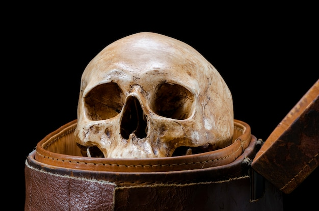 Still life with human skull are placed in old leather box isolated on black background