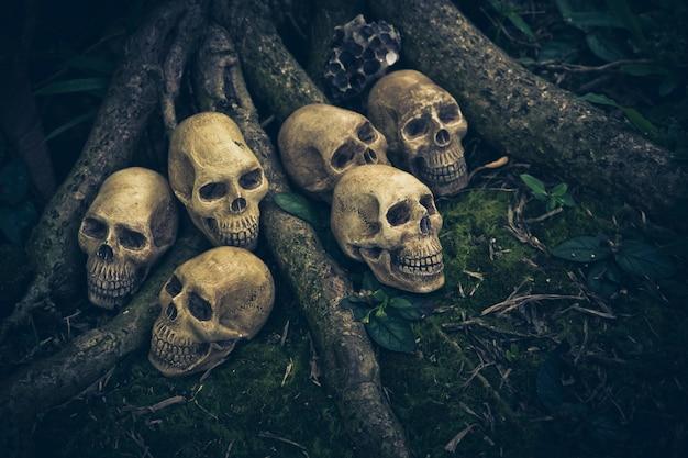 人間の頭蓋骨の根を持つ静物