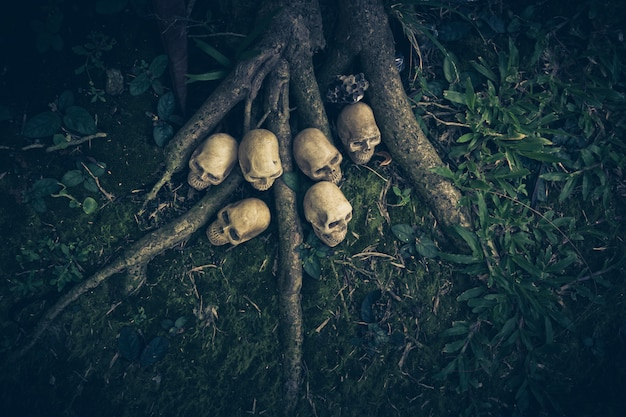 Still life with human skull  on the roots