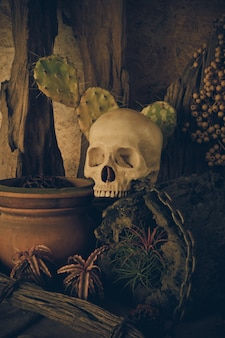 Still life with a human skull with desert plants.