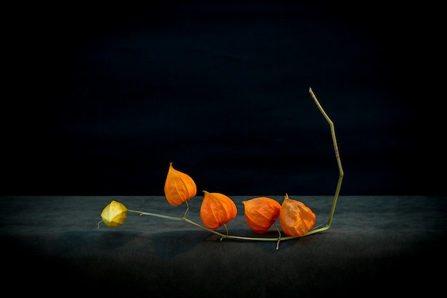 Still life with physalis branch on a dark