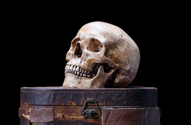 Still life with side view of human skull on a black background