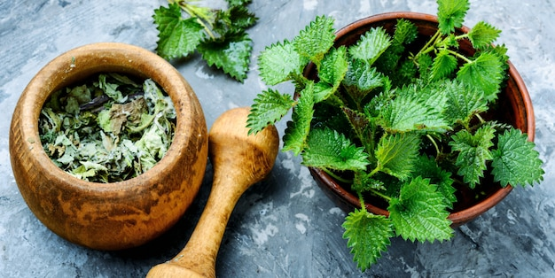 Stinging nettles,urtica medical herb