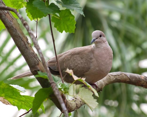 흐린 배경 햇빛 아래 녹지로 둘러싸인 나뭇 가지에 앉아 주식 비둘기