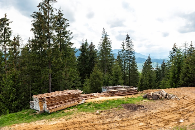 Stocks of wood raw materials are dried on a hill in the forest
