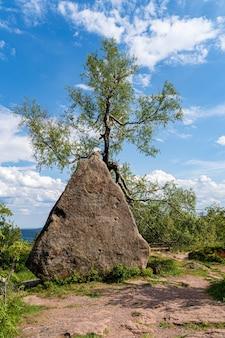 崖の近くの石と木