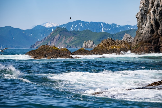 Каменные скалы острова в тихом океане. дикая природа камчатки. дальний восток, россия
