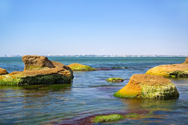 Stone covered with green algae in the sea with sky blue as background