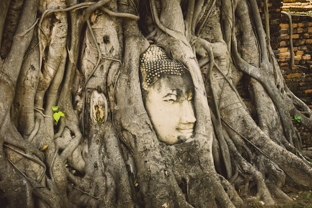 Stone head of buddha surrounded by tree's roots in wat prha mahathat temple in ayutthaya, thailand