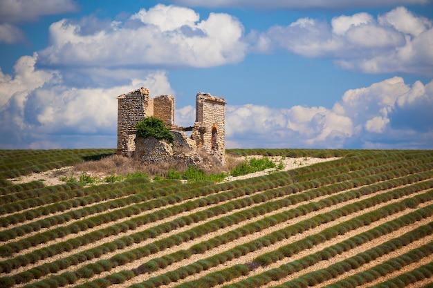 フランス、プロヴァンス、ヴァロンソルの収穫されたラベンダー畑の石造りの家の廃墟