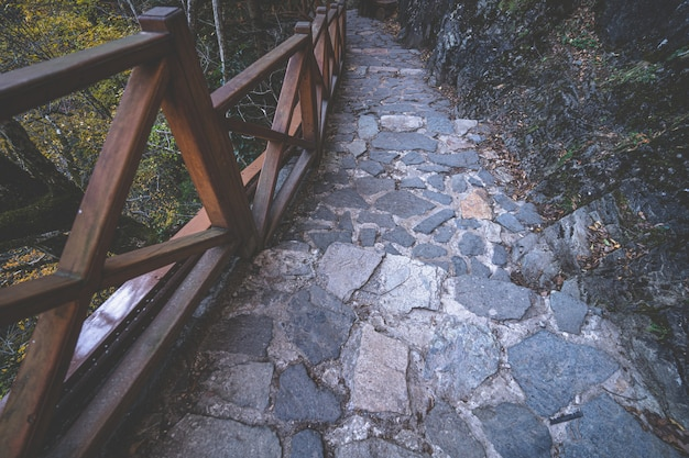 Stone path with wooden railing for walking in the forest
