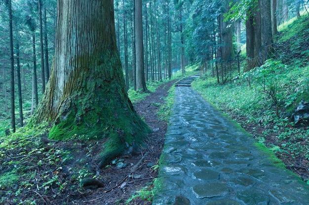 日光の風光明媚な杉林の石の小道