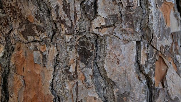 ヨーロッパの石松の木の幹元の自然なテクスチャの背景として古い木の茶色の樹皮
