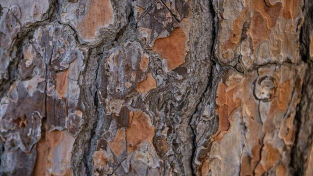 ヨーロッパの石松の木の幹デザインのための自然の概念素朴な木の背景pinuspinea
