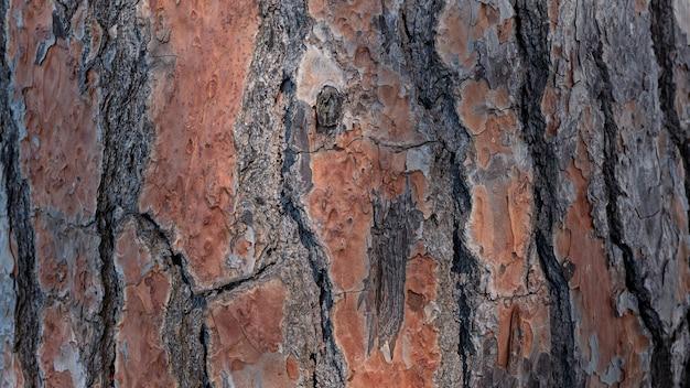 ヨーロッパのイタリアカサマツの幹元の自然な風合いとしての古い木の茶色の樹皮